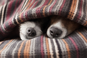 A Guide to Pet-proofing Your House