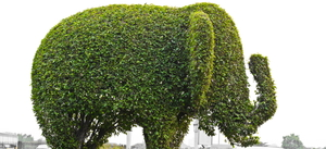 How to Trim a Bush in Fun Shapes