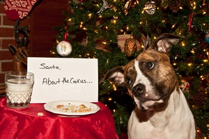 Holiday Food Dos and Don'ts for Pets