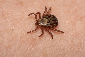 Ta-Ta Ticks! A Prevention and Removal Guide