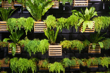 How to Create a Living Wall