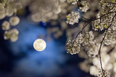 holdfényes virágok