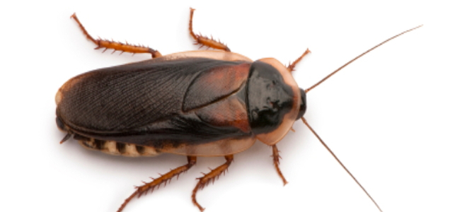 Cockroach coming out of pussy
