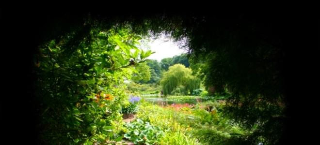 Garden Anywhere by Alys Fowler  amazoncom