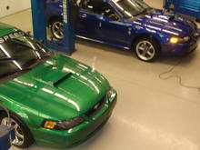 Green Stallion and Blue Demon