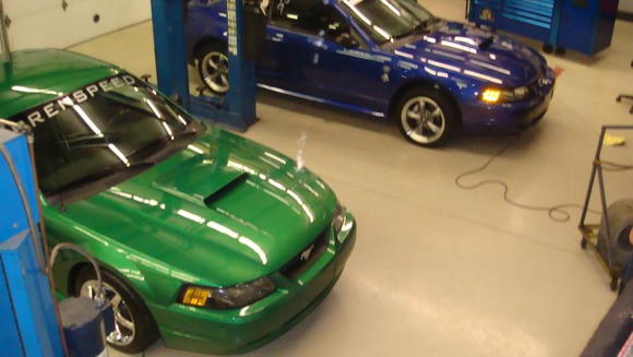 Green Stallion and Blue Demon