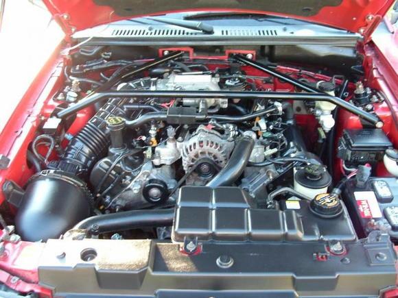 Mustang013