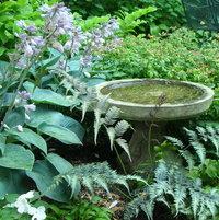 birdbath (back garden)