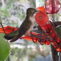 My test tube hummingbird feeders