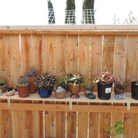 outdoor shade clothed shelf for some of our Tarzana stuff