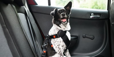 Where Should Your Dog Sit in the Car? - Banner