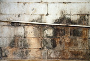 Mold grows on a leaky foundation wall.
