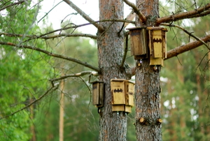 wooden bat homes on pine trees