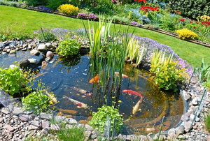 Koi pond in a landscaped yard