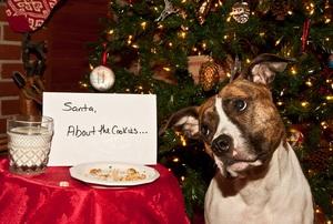 dog eats santa's cookies