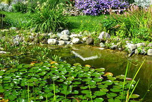 Beautiful pond with water lilies