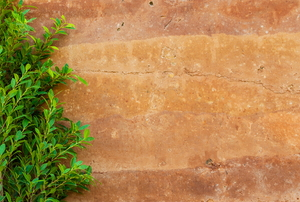 rammed earth wall with plant