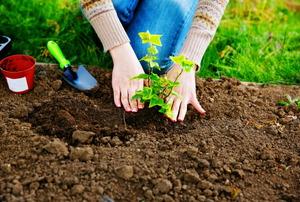 Women planting in a garden