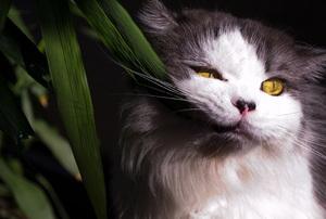 pet cat eating leaves