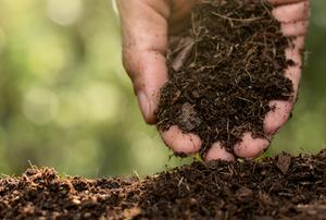 Soil.