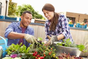 A couple gardening in an urban environment.
