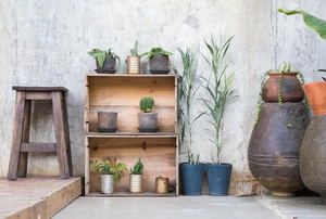 A collection of plants against a gray color washed wall.
