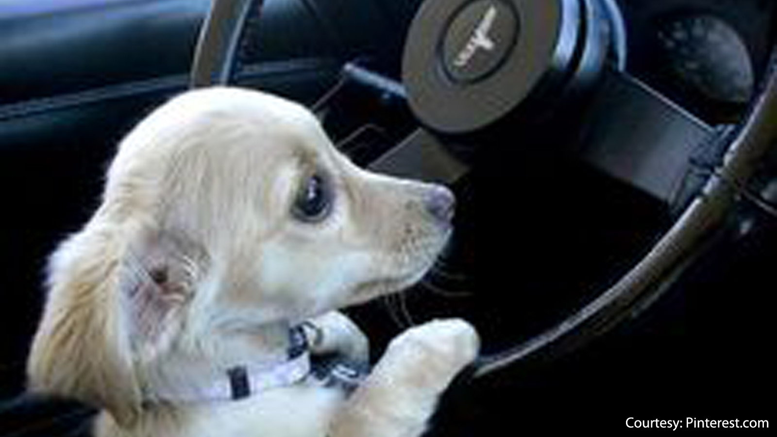 Dog with a License