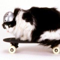 keep_cats_moving_200.jpg