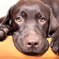 Stress Relief for Pets