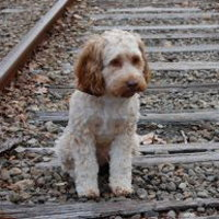 Dog_railroad_tracks1.jpg