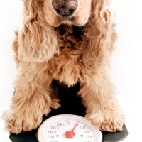 pet_weight_critical_200.jpg