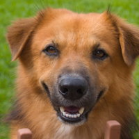 smiling_dog.jpg