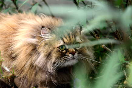 image of a cat in tall grass.