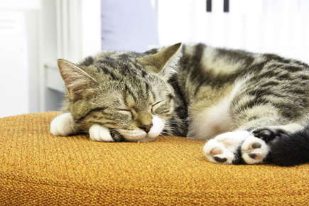 image of sleeping cat.