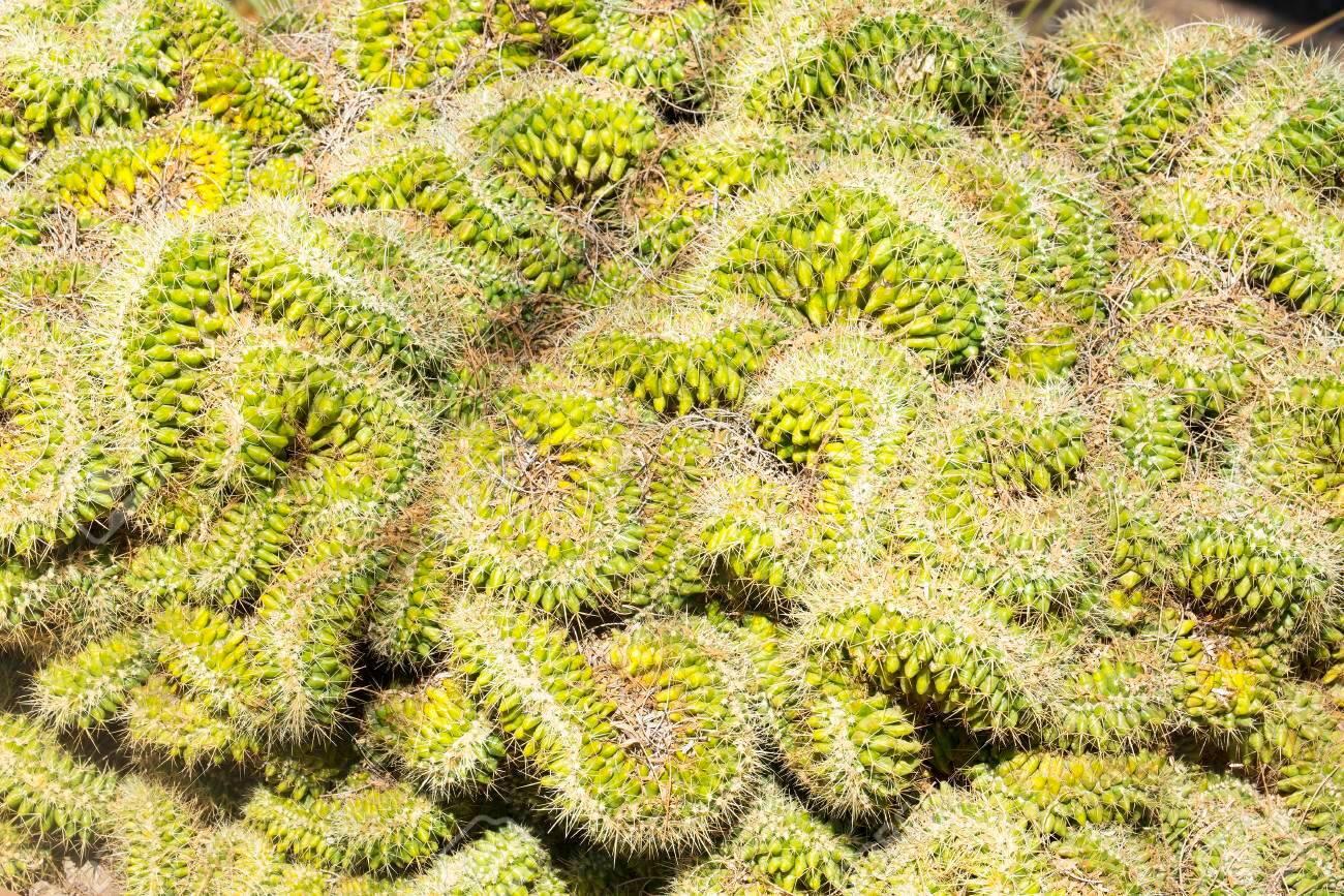 odd coiled cacti