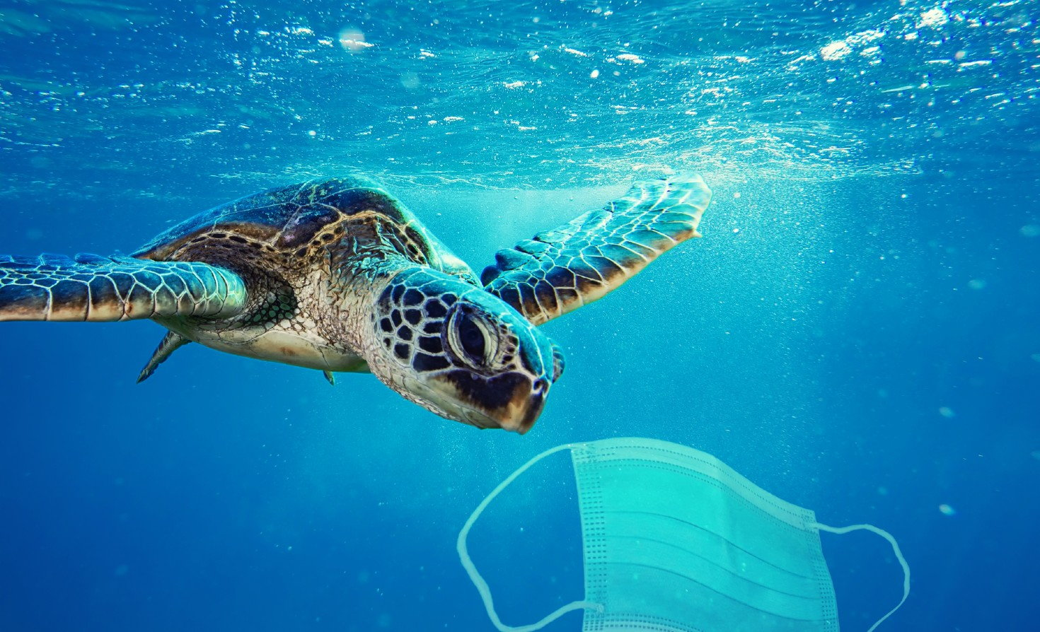 sea turtle swimming toward floating mask