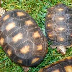National Tortoise Day Article: Proper Diet for Desert Tortoises