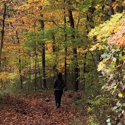 person walking on a woodland trail