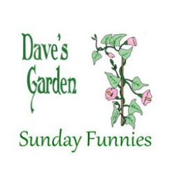 Dave's Garden vine and flowers with logo
