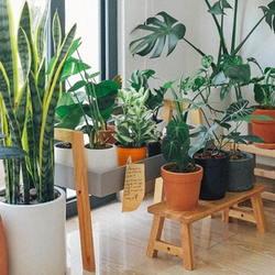 Pretty houseplants in a room