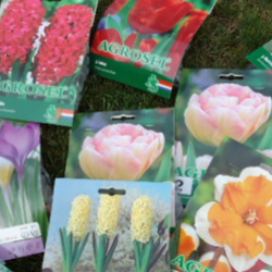 Packages of various spring bulbs