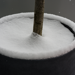 Potted Plant with soil surface covered in snow