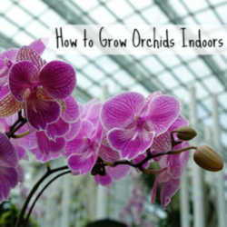 How to Grow Orchids Indoors - Dave's Garden