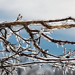 Ice covered branches