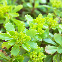 Green spiky leafed ground cover