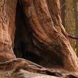 Hiker Admiring Tree Trunk