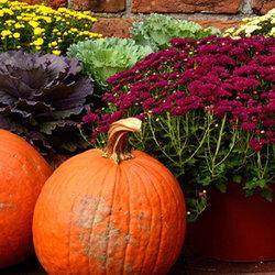 autumn container garden