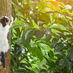 Cat jumping onto a tree in a garden