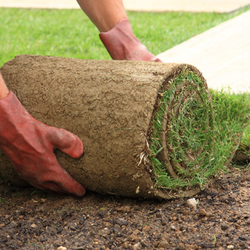Hands moving a bundled of rolled grass sod