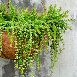Hanging Planter in front of concrete wall